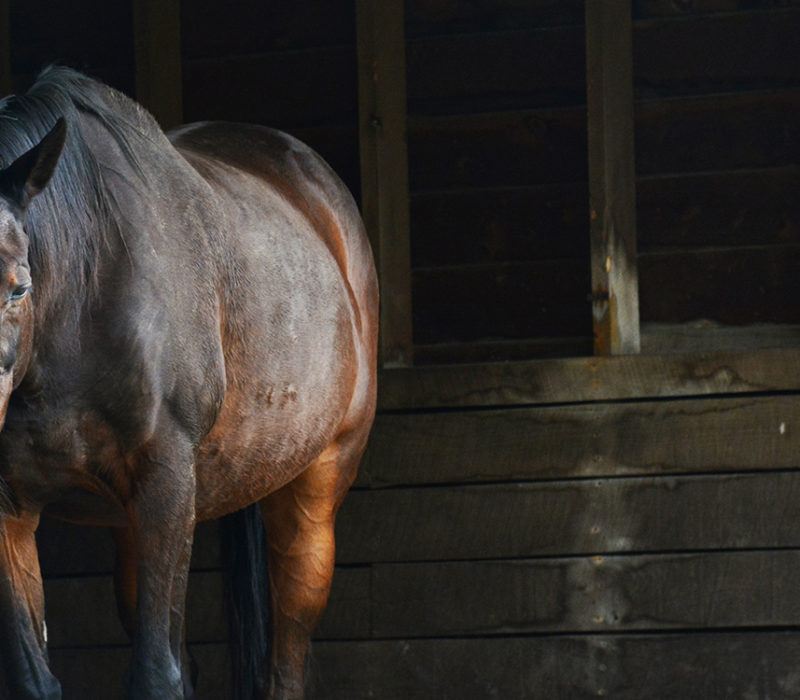 horse standing in a barn