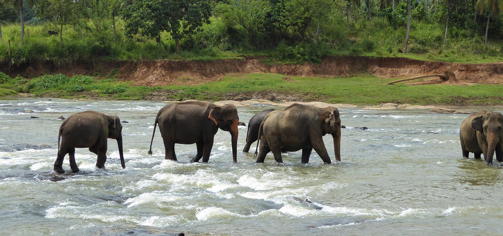 elephants at a thai animal sanctuary